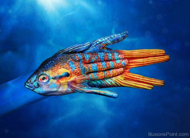Blue-Screen-Fish-Optical-Illusion